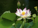 Lotus Blooming Yoga Retreat